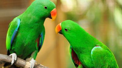 double-parrot.jpg