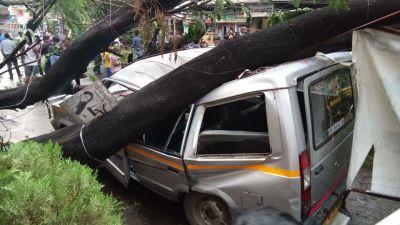 tree-fallen.jpg